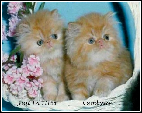 Cambysis1.jpg