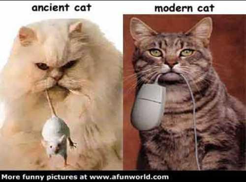 katten.jpg